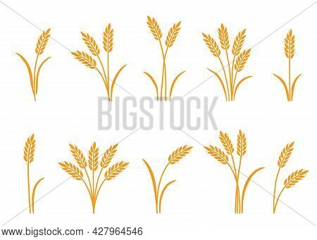 Wheat, Barley, Rice Icon. Hand Drawn Sketch Style Oat With Grain. Wheat Isolated Vector Illustration