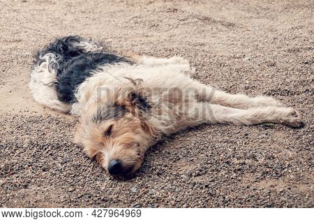 Homeless Dog Is Sleeping On The Floor. Young Stray Dog Sleeping
