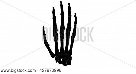 Back View Of Forearm In Black And White Isolated Background