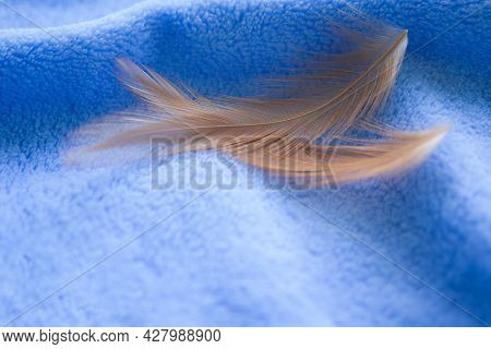 Soft Focus Brown Feather Fluffy Nature On Blue Towel Background.  Flat Lay And Free Space. Tendernes