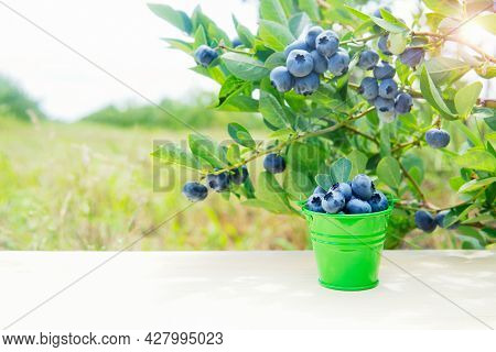 Small Green Bucket Full Of Blueberries Standing On A Wooden Table By A Blueberry Bush