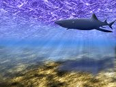 Abstract background of the underwater world with a floating shark. poster