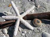 five armed starfish seashells driftwood on beach poster