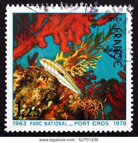 Postage Stamp France 1978 Fish And Corals