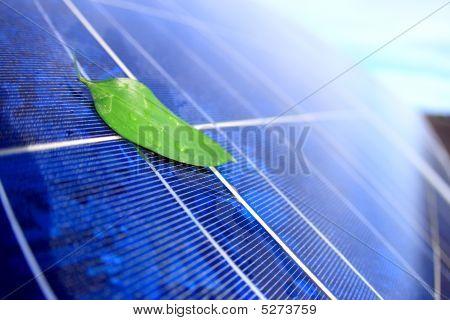 Solar Panel with leaf