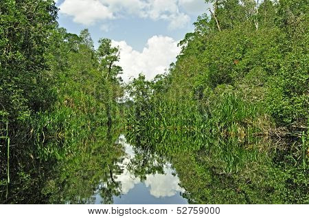 Rain forest mirrored in water