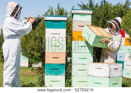 Beekeepers in protective clothing working at apiary