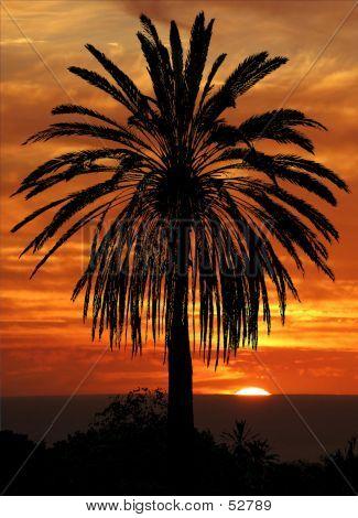 Palm Against A Setting Sun...