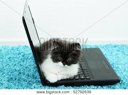 Little cute kitten and laptop  on carpet poster