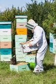 Side view of beekeeper in protective workwear carrying honeycomb frames in crate at apiary poster