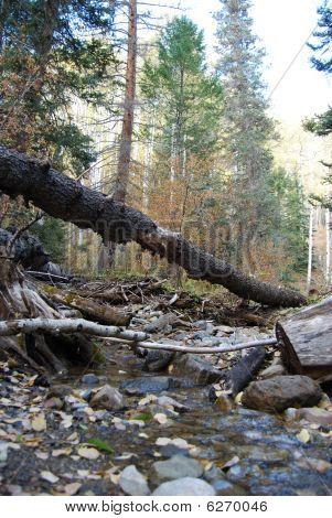 Colorado Woods