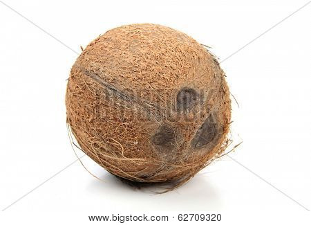 Ripe big cocoanut on white background