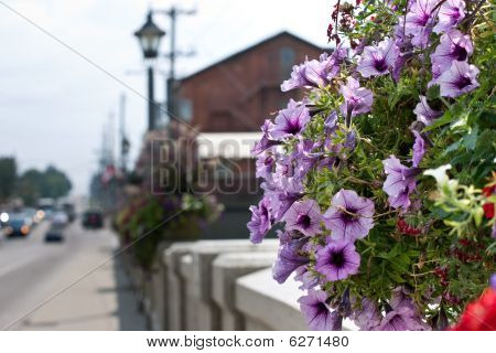 Hanging Flower Basket On A Bridge