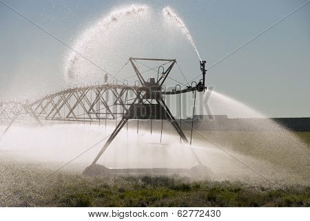 Center pivot irrigation system on a alphafa field in central Oregon with crow and nest. poster