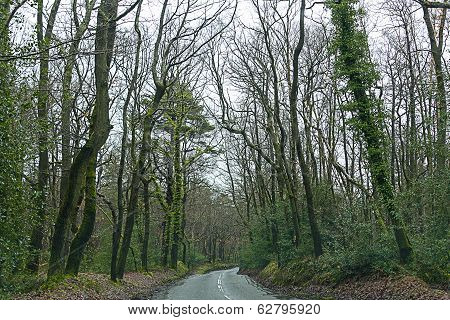 A Road In Forest Near Guildford, Uk