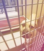 a stray dog at the pound or shelter done with a retro vintage instagram filter   poster