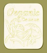 Fresh Organic Banana Label. Vector illustration. Retro fruitl design. Vector old paper texture background. poster