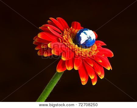 Globe blooming from flower