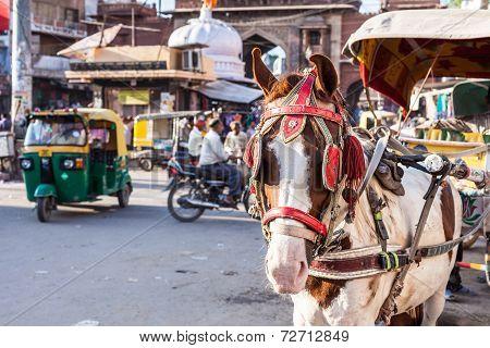 Ride Horse Cart At Sadar Market, India.