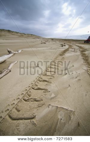 ATV tire tracks in the beach sand