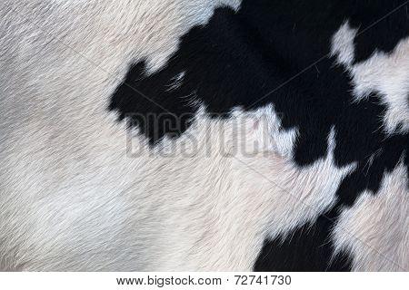 Cow Skin Detail