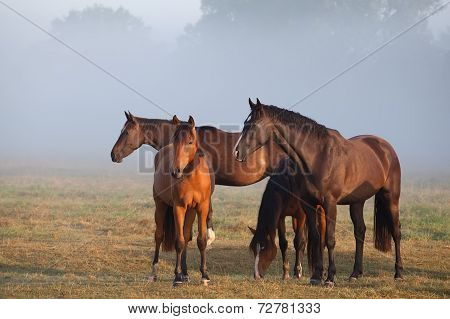 Horses On Foggy Pasture