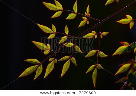 Leaves on black background