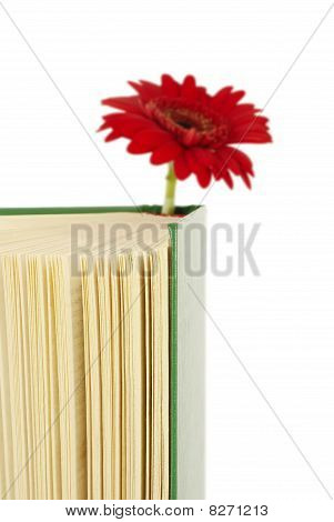 Book With A Red Flower.