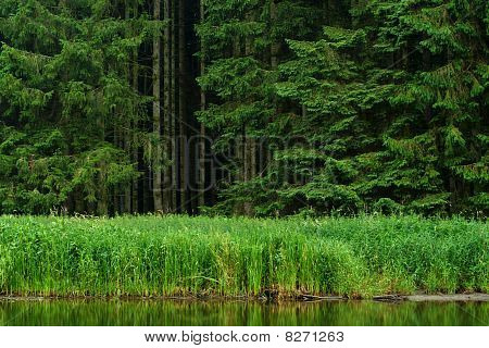 forest on the river bank