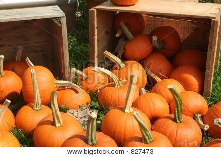 Pumpkin_9217
