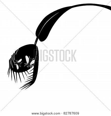 Venus Flytrap And Fly
