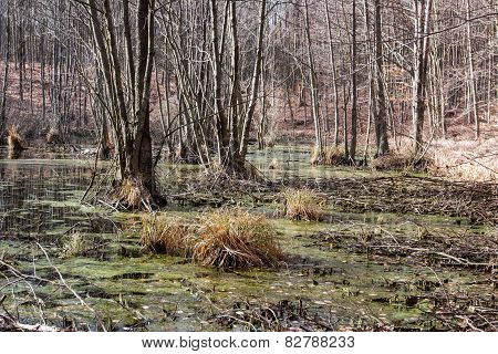 Swamp in the forest in spring