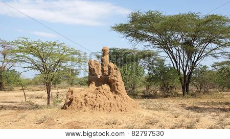 Termite Nest, Ethiopia, Africa