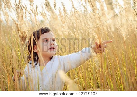 Little girl plucks a spikelets grass in the field
