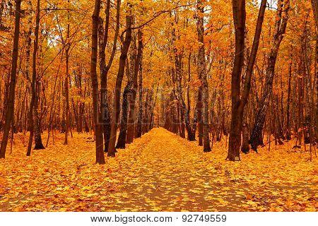 Autumn Forest In Deep Autumn. Golden Fall