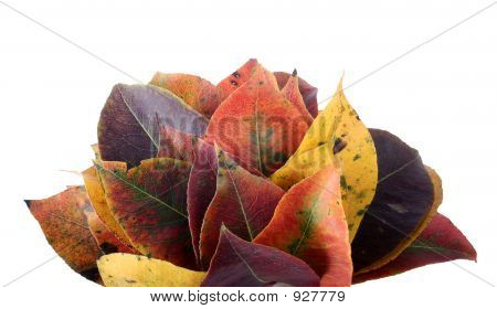 Collection Of Perfect Autumnal Leafs