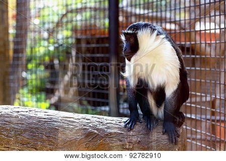 Monkey In Zoo Cell