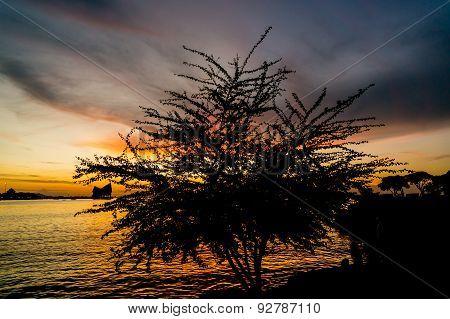 silhouette of tree, The atmosphere during sunset at Koh Loi Sriracha,Chonburi,Thailand