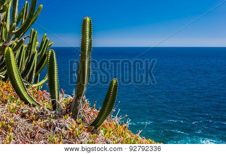 Cactuses of Gran Canaria