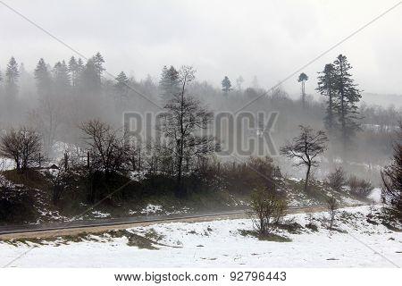 Foggy forest - sugesting depression