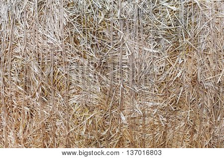 Dry golden yellow straw closeup. Farming harvest background. Agricultural pressed thatch wall texture. Abstract natural pattern