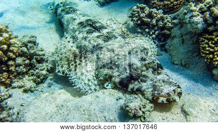 Crocodile fish laying on the ground, Egypt Marsa Alam