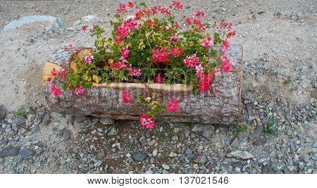 Closeup of a beautifully composed wooden flower planter with colorful pink red flowers stands outdoors. Alsace France.