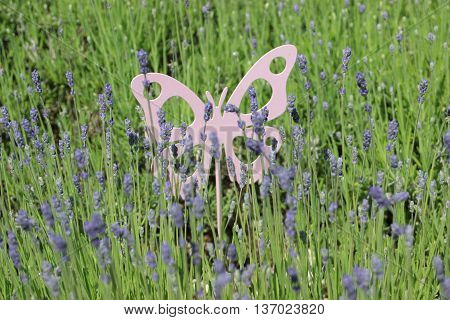Field of purple lavender with metal butterfly decoration