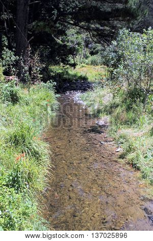 A tranquil gentle running stream on a summer day