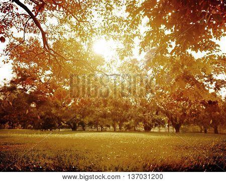 Park Forest Garden Scenics Nature Environmental Concept