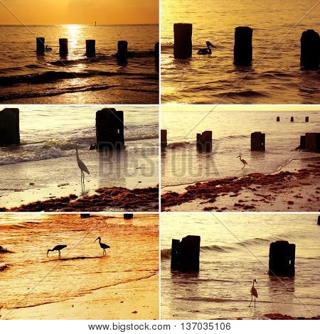 various sea bird images during sunset in Florida