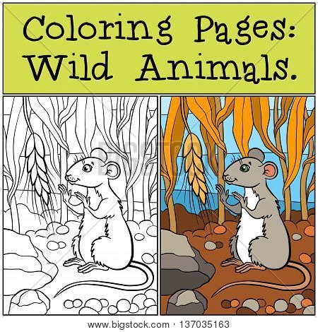 Coloring Pages: Wild Animals. Little Cute Mouse Looks At The Wheat.