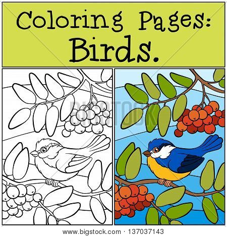 Coloring Pages: Birds. Little Cute Titmouse.