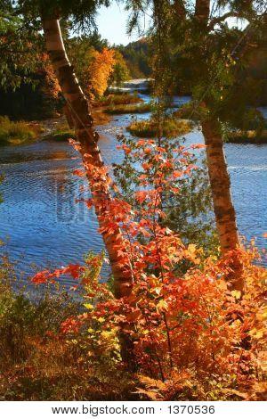 Autumn Time Trees
